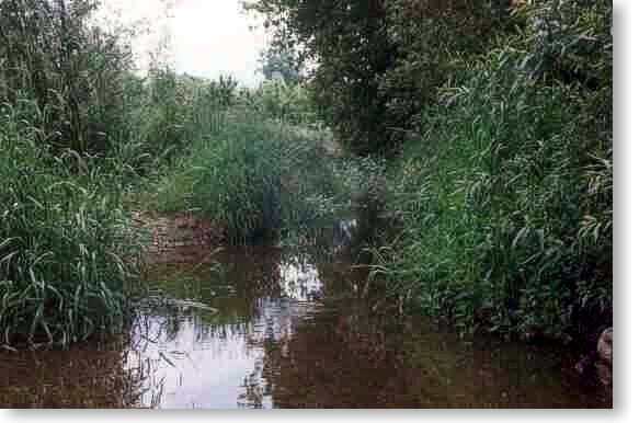 Wasser und mehr - Dschungel
